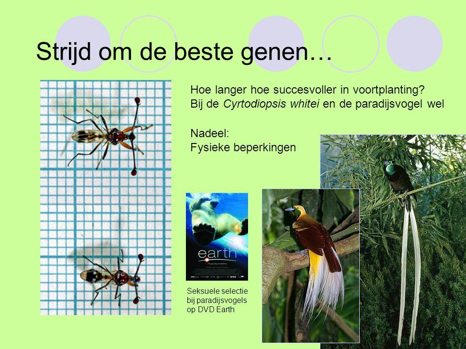 Strijd om de beste genen… Hoe langer hoe succesvoller in voortplanting? Bij de Cyrtodiopsis whitei en de paradijsvogel wel Nadeel: Fysieke beperkingen