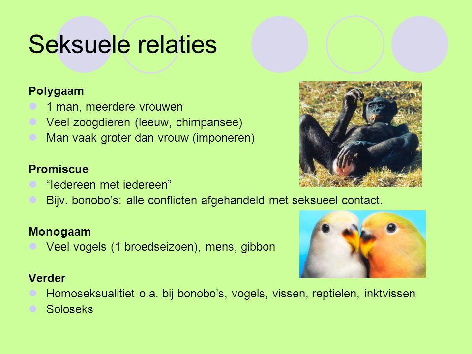 """Seksuele relaties Polygaam 1 man, meerdere vrouwen Veel zoogdieren (leeuw, chimpansee) Man vaak groter dan vrouw (imponeren) Promiscue """"Iedereen met i"""