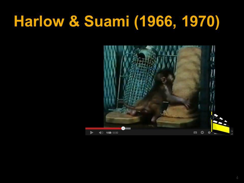 © drs. Caroline Heijmans   heijmans@ator-opleidingen.nl Harlow & Suami (1966, 1970) 4