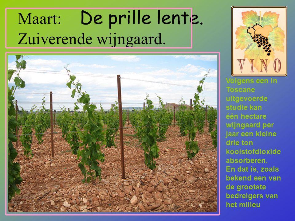 Maart: De prille lente.Zuiverende wijngaard.