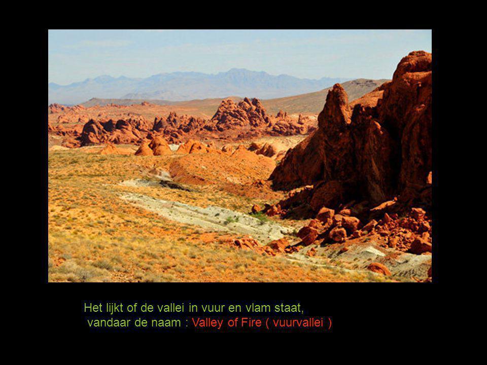 De roestkleurige kleur komt door het hoge ijzergehalte in de bodem. ijzererts + lucht + water, vormt roest