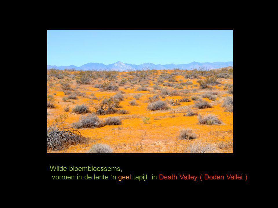 Mooie close-ups van Cactusbloemen Maar kijk uit voor de nijdige stekels !