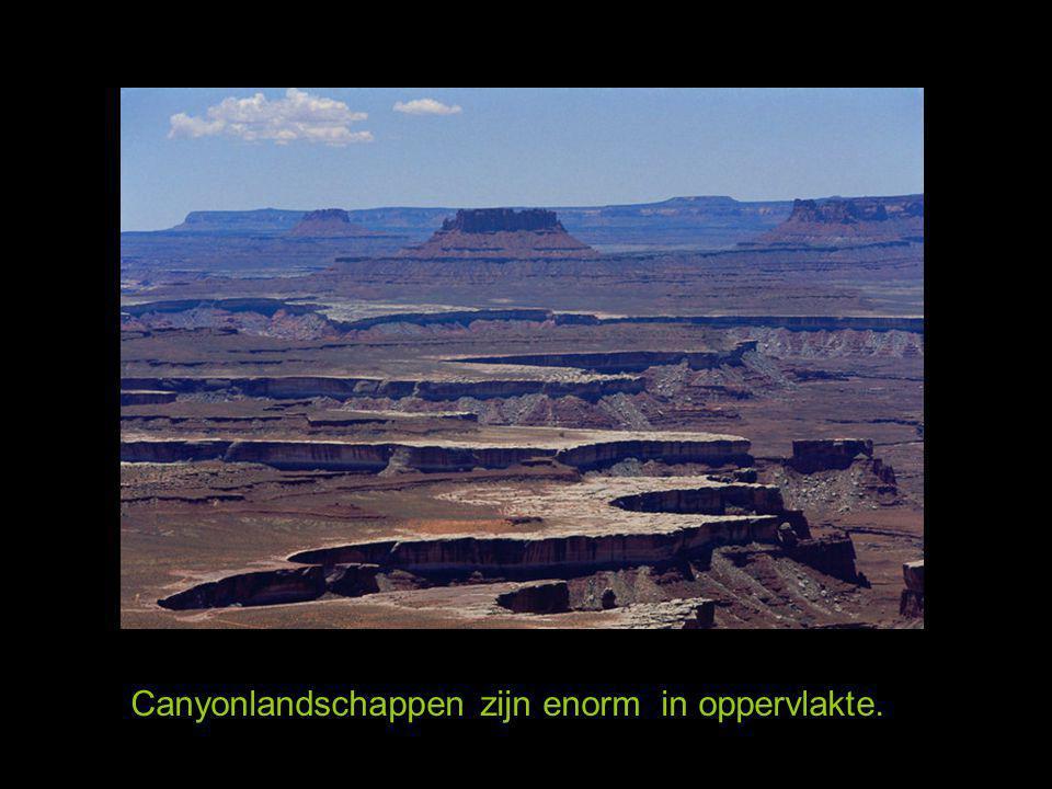 Canyonlandschappen zijn enorm in oppervlakte.