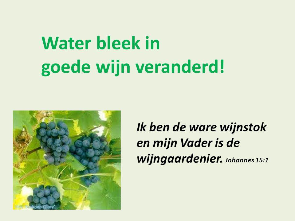 Water bleek in goede wijn veranderd! Ik ben de ware wijnstok en mijn Vader is de wijngaardenier. Johannes 15:1