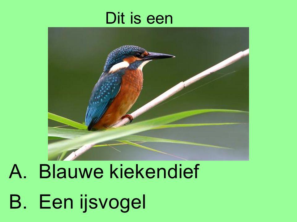 Dit is een B.Een ijsvogel A.Blauwe kiekendief