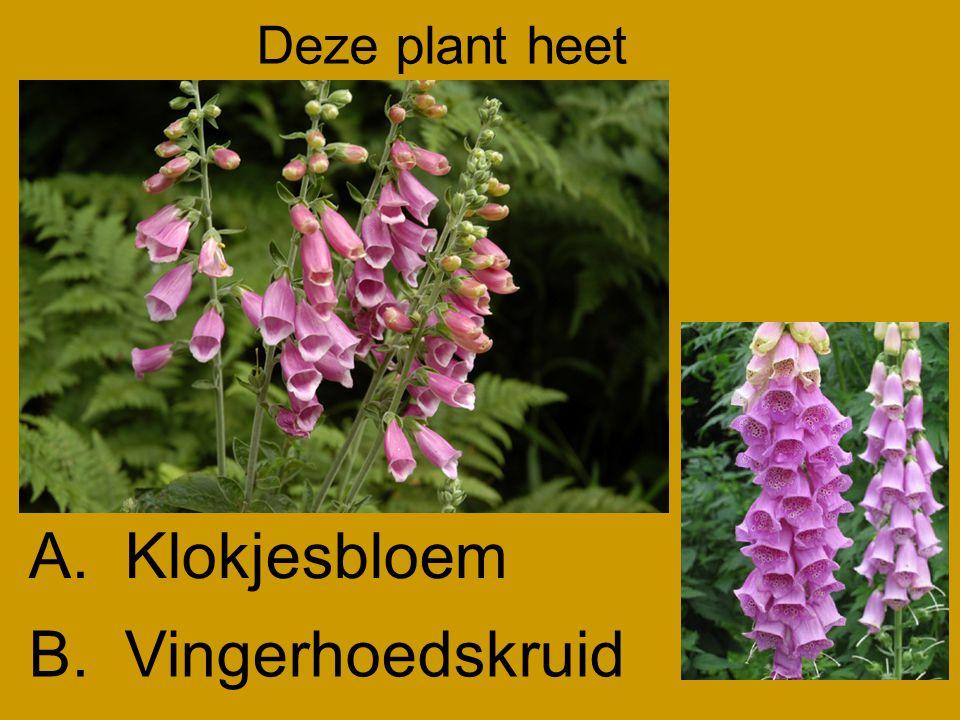 Deze plant heet B.Vingerhoedskruid A.Klokjesbloem