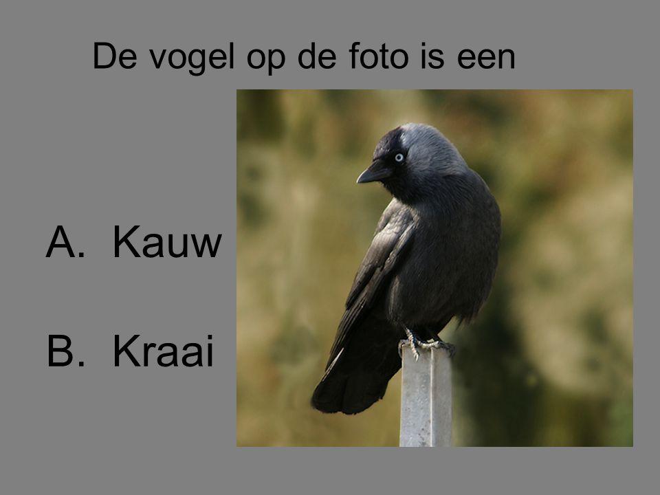 De vogel op de foto is een B.Kraai A.Kauw