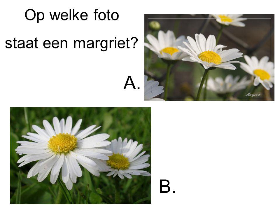 Op welke foto staat een margriet? A. B.