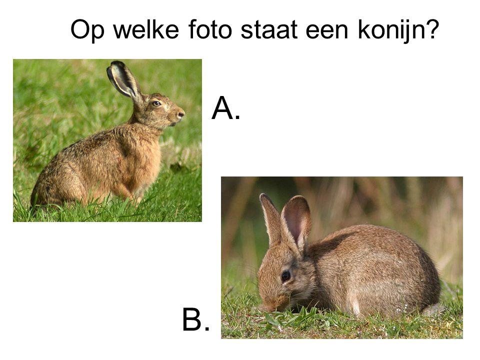 Op welke foto staat een konijn? A. B.