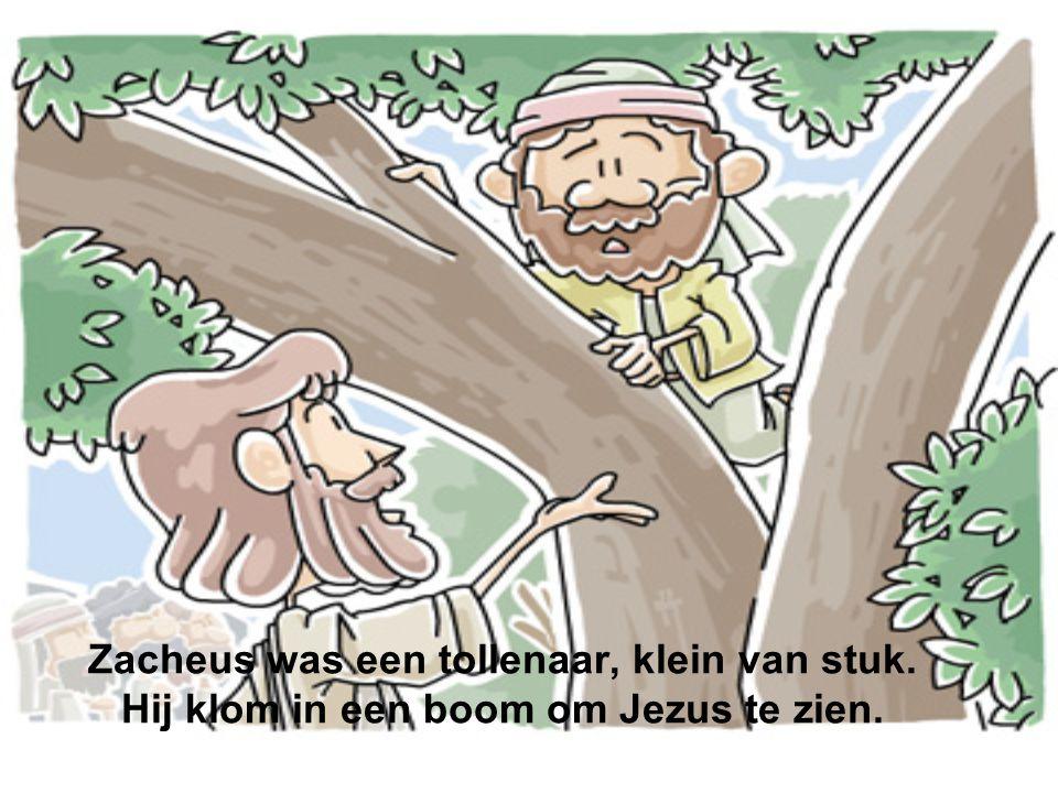 Zacheus was een tollenaar, klein van stuk. Hij klom in een boom om Jezus te zien.