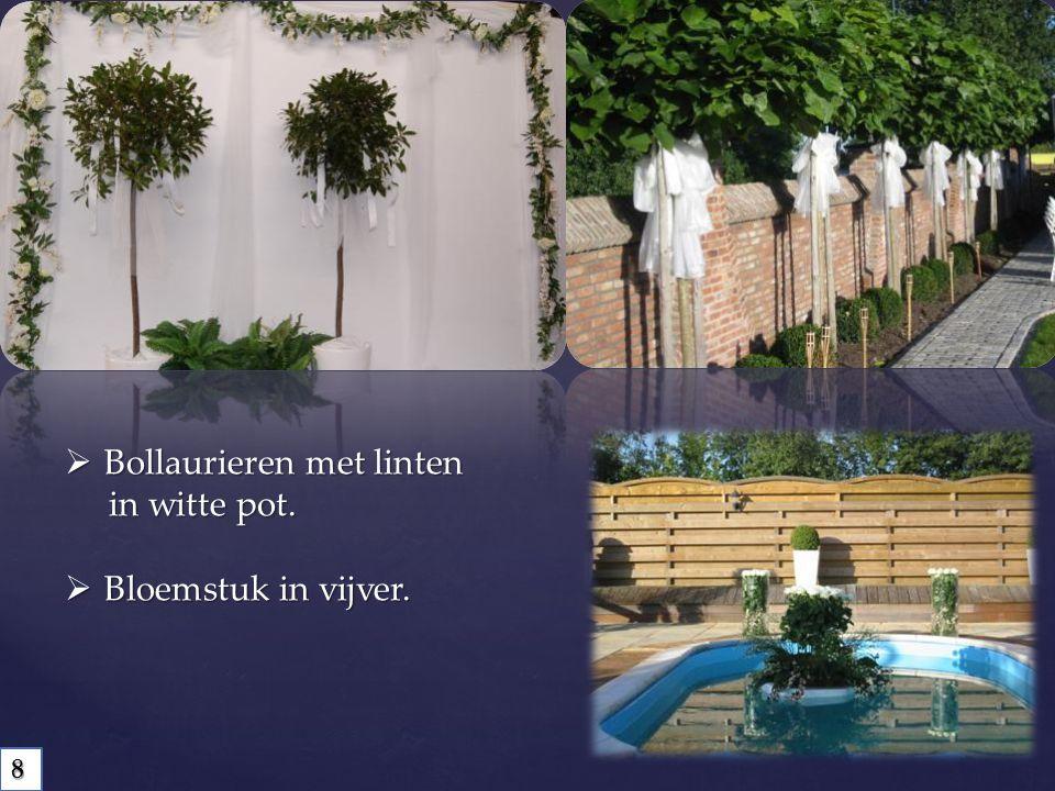 Bollaurieren met linten in witte pot. in witte pot.  Bloemstuk in vijver. 8