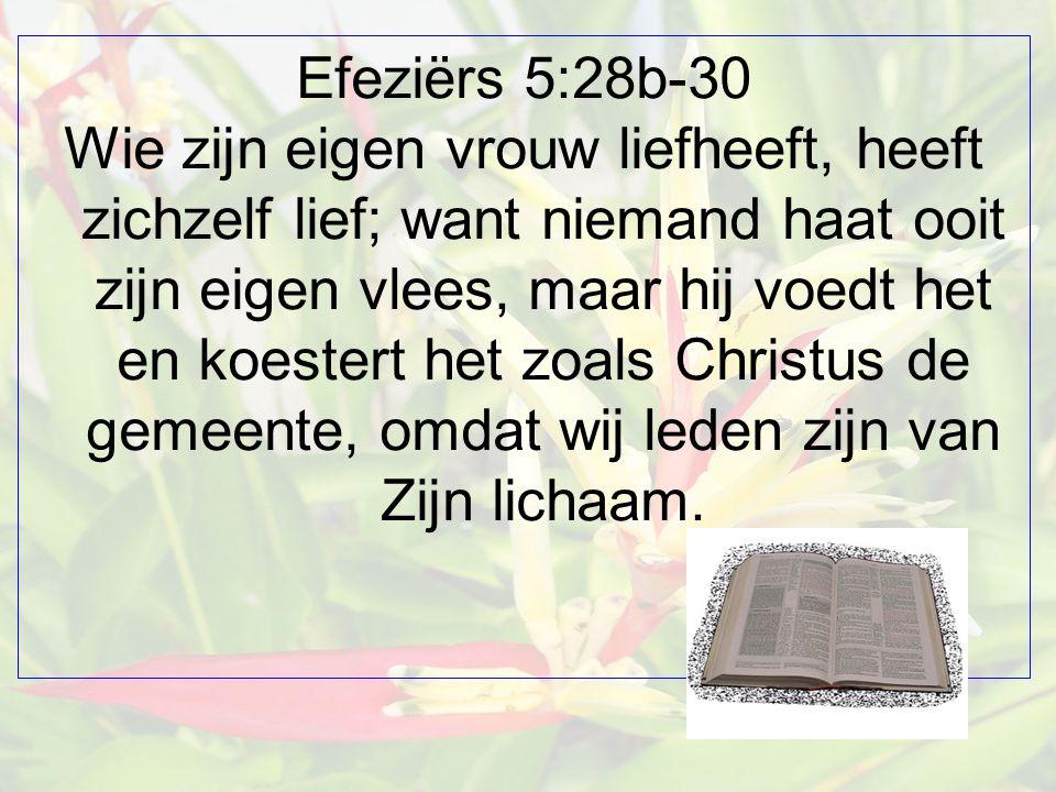 Efeziërs 5:28b-30 Wie zijn eigen vrouw liefheeft, heeft zichzelf lief; want niemand haat ooit zijn eigen vlees, maar hij voedt het en koestert het zoals Christus de gemeente, omdat wij leden zijn van Zijn lichaam.