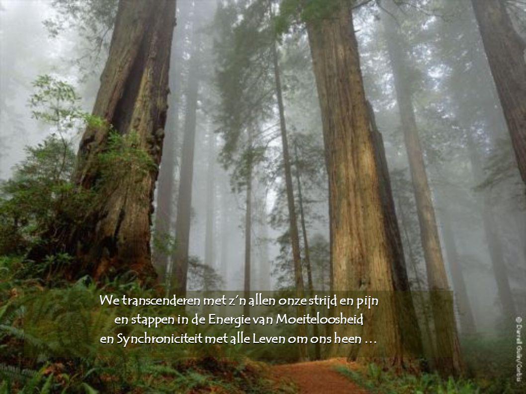 We transcenderen met z'n allen onze strijd en pijn en stappen in de Energie van Moeiteloosheid en Synchroniciteit met alle Leven om ons heen …