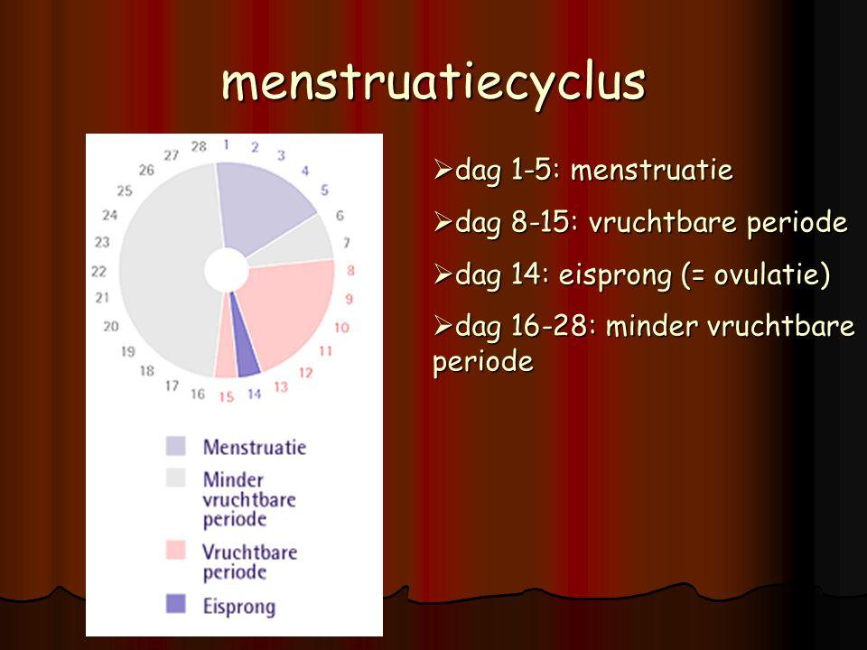De bevruchting  Vindt plaats aan het begin van één van de eileiders, vlakbij een eierstok eileiders  De eicel wordt via een trechter in de eileider opgevangen  In de eileider zitten trilhaartjes die de eicellen naar de baarmoeder brengen.