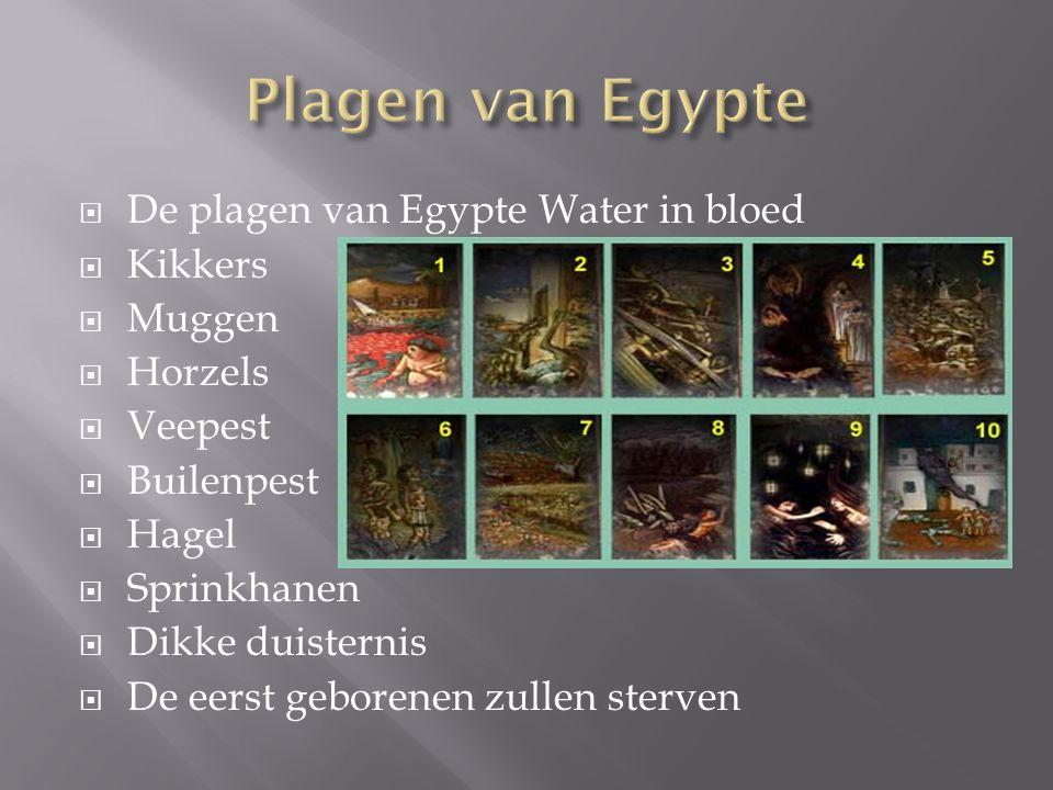  De plagen van Egypte Water in bloed  Kikkers  Muggen  Horzels  Veepest  Builenpest  Hagel  Sprinkhanen  Dikke duisternis  De eerst geborene
