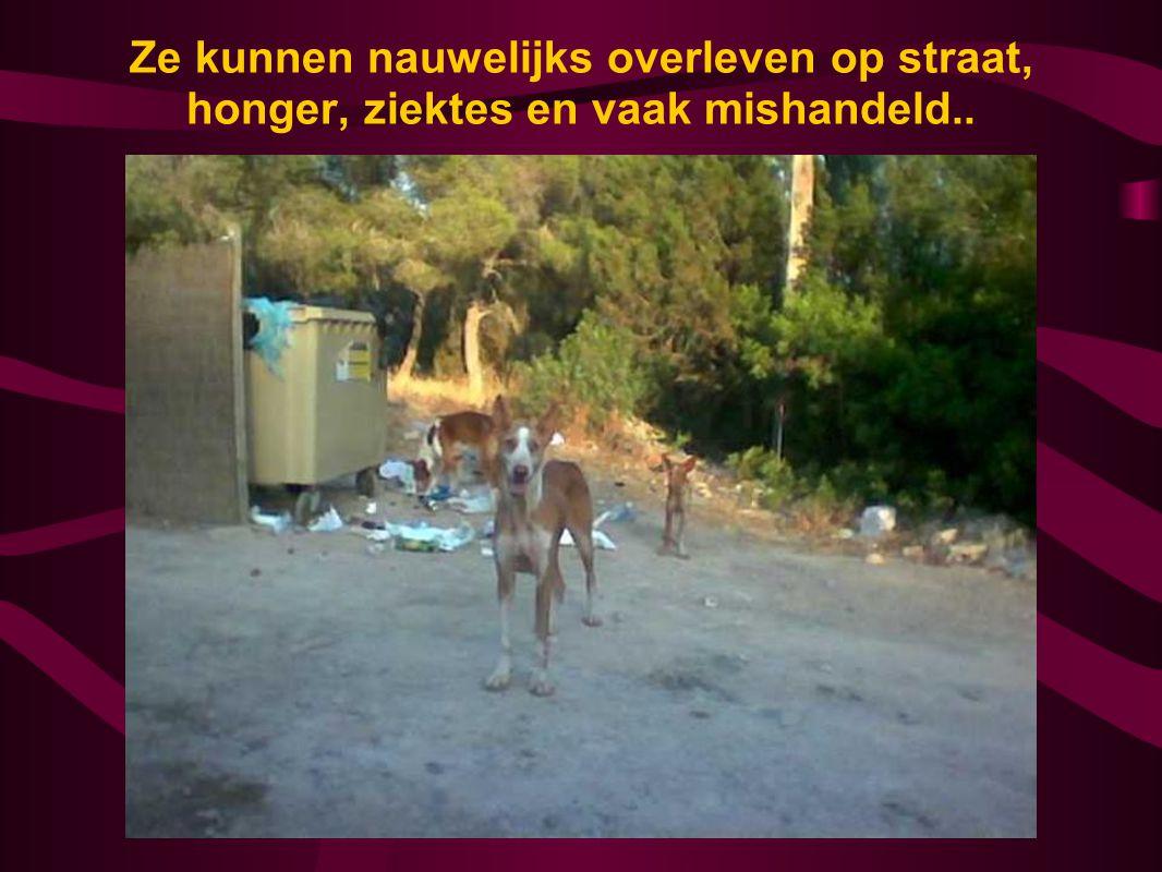 Ze kunnen nauwelijks overleven op straat, honger, ziektes en vaak mishandeld..