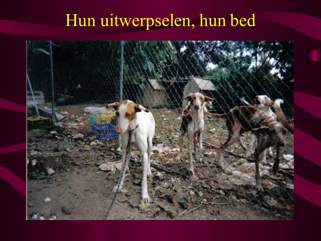 Hun uitwerpselen, hun bed