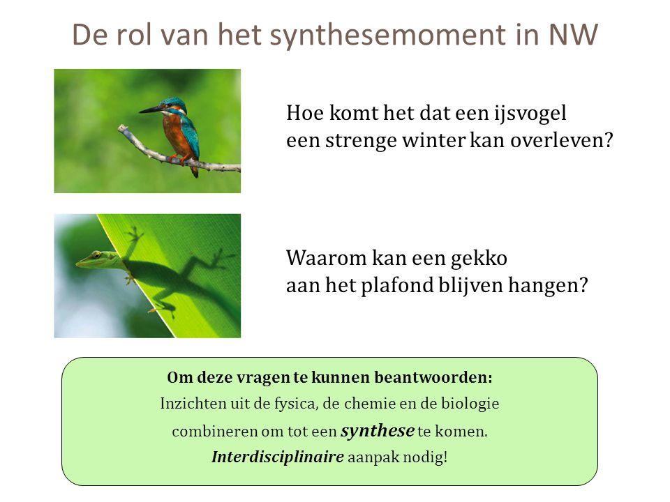 De rol van het synthesemoment in NW Hoe komt het dat een ijsvogel een strenge winter kan overleven? Waarom kan een gekko aan het plafond blijven hange