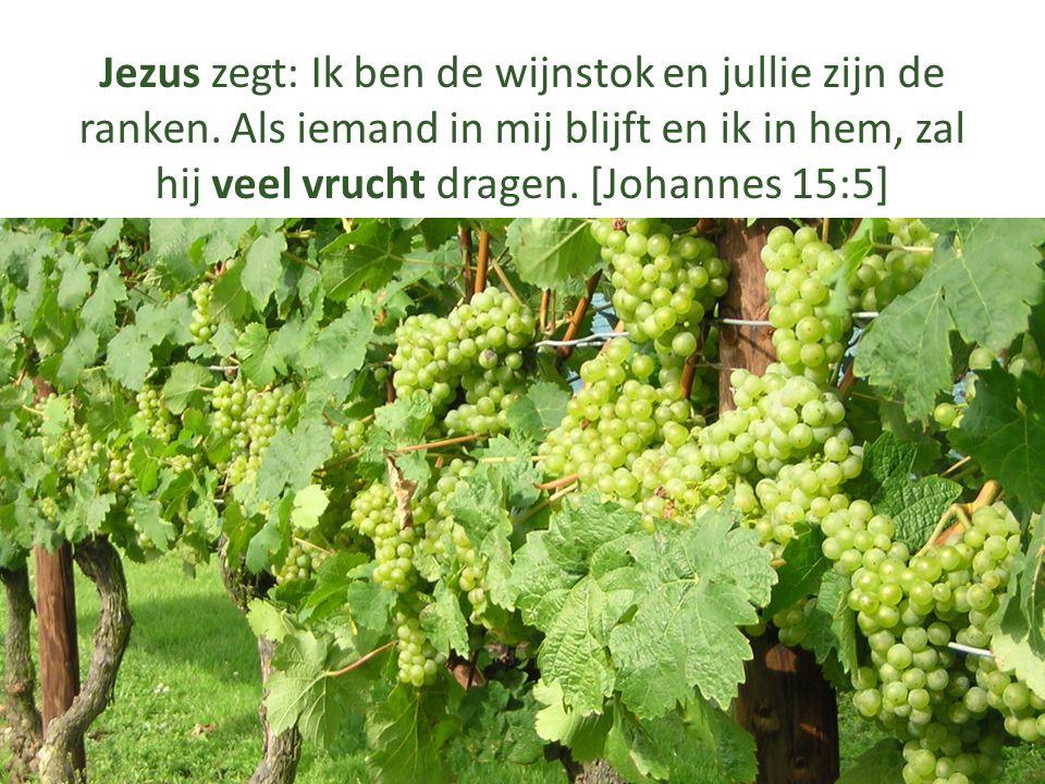 Jezus zegt: Ik ben de wijnstok en jullie zijn de ranken. Als iemand in mij blijft en ik in hem, zal hij veel vrucht dragen. [Johannes 15:5]