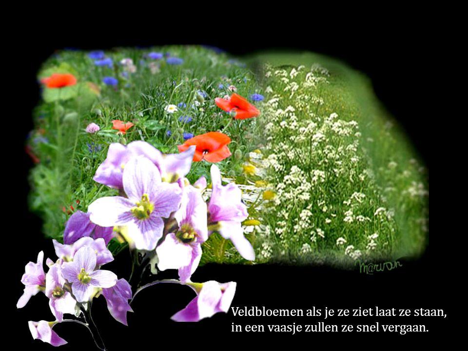 Veldbloemen als je ze ziet laat ze staan, in een vaasje zullen ze snel vergaan.