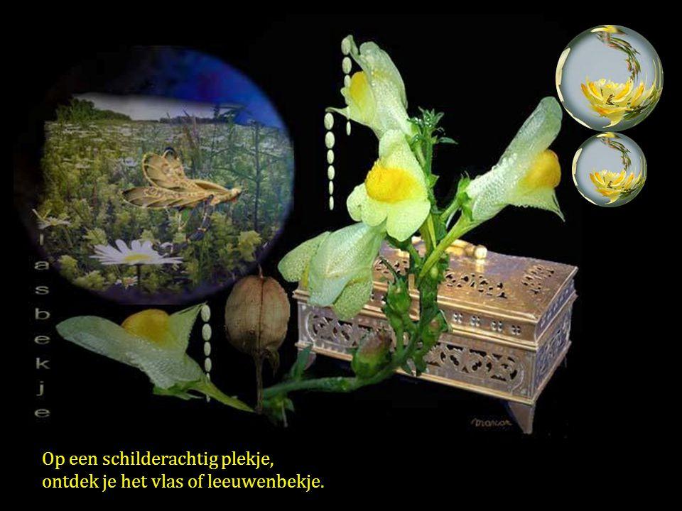 Witte klaverhoning kleverig zoet, door gonzende bezige bijtjes begroet.