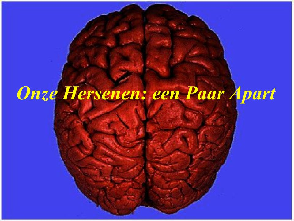 Onze Hersenen: een Paar Apart
