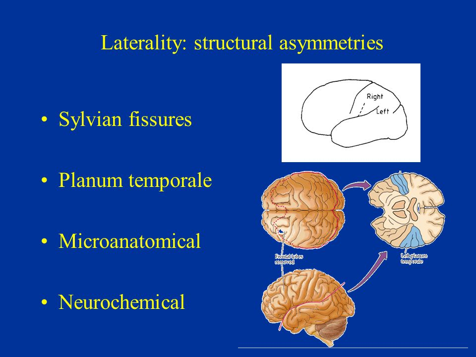 Laterality: structural asymmetries Sylvian fissures Planum temporale Microanatomical Neurochemical