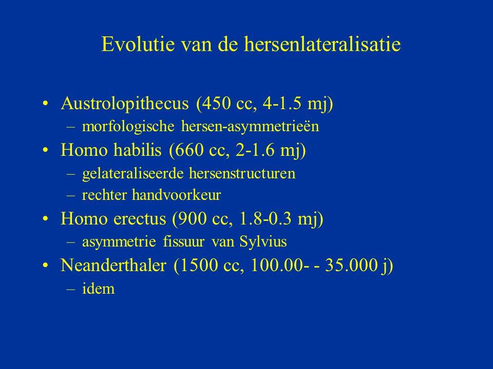 Evolutie van de hersenlateralisatie Austrolopithecus (450 cc, 4-1.5 mj) –morfologische hersen-asymmetrieën Homo habilis (660 cc, 2-1.6 mj) –gelaterali