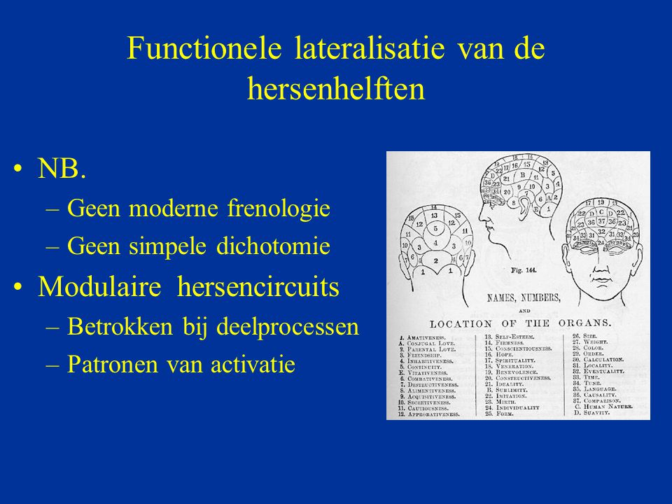 Functionele lateralisatie van de hersenhelften NB. –Geen moderne frenologie –Geen simpele dichotomie Modulaire hersencircuits –Betrokken bij deelproce
