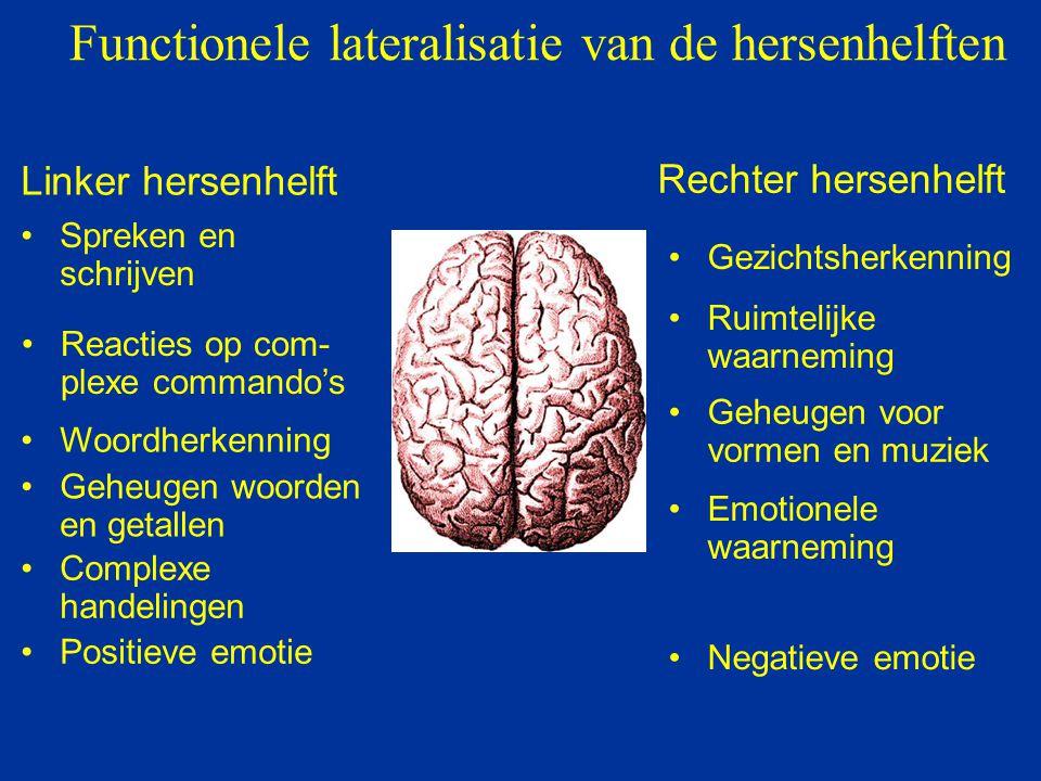Functionele lateralisatie van de hersenhelften Linker hersenhelft Rechter hersenhelft Spreken en schrijven Reacties op com- plexe commando's Woordherk