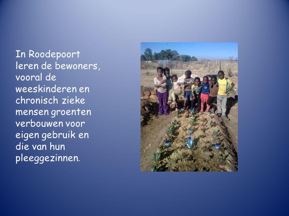 In Roodepoort leren de bewoners, vooral de weeskinderen en chronisch zieke mensen groenten verbouwen voor eigen gebruik en die van hun pleeggezinnen.