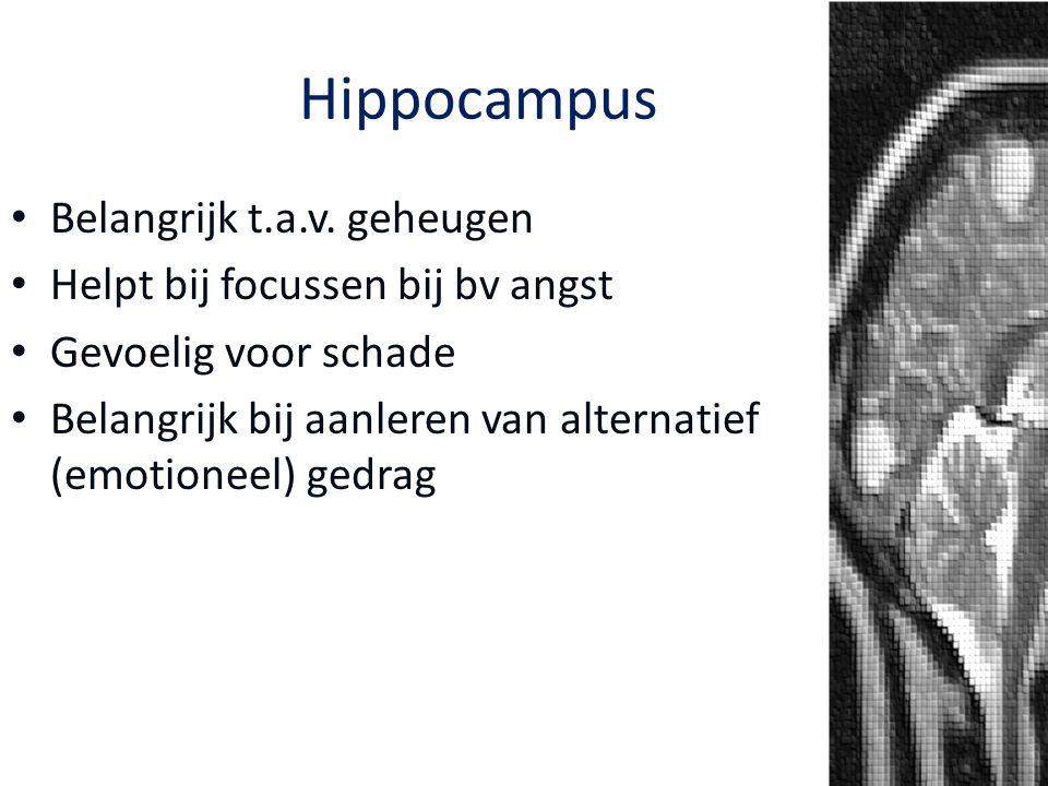 Belangrijk t.a.v. geheugen Helpt bij focussen bij bv angst Gevoelig voor schade Belangrijk bij aanleren van alternatief (emotioneel) gedrag Hippocampu