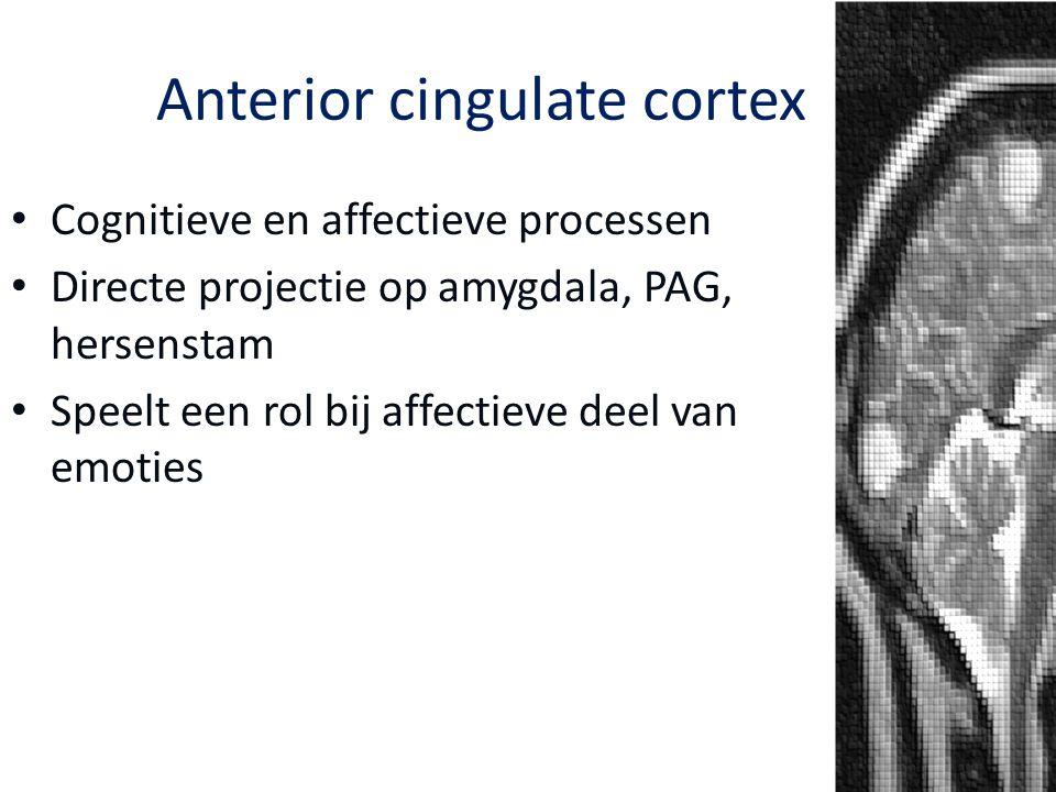Cognitieve en affectieve processen Directe projectie op amygdala, PAG, hersenstam Speelt een rol bij affectieve deel van emoties Anterior cingulate co