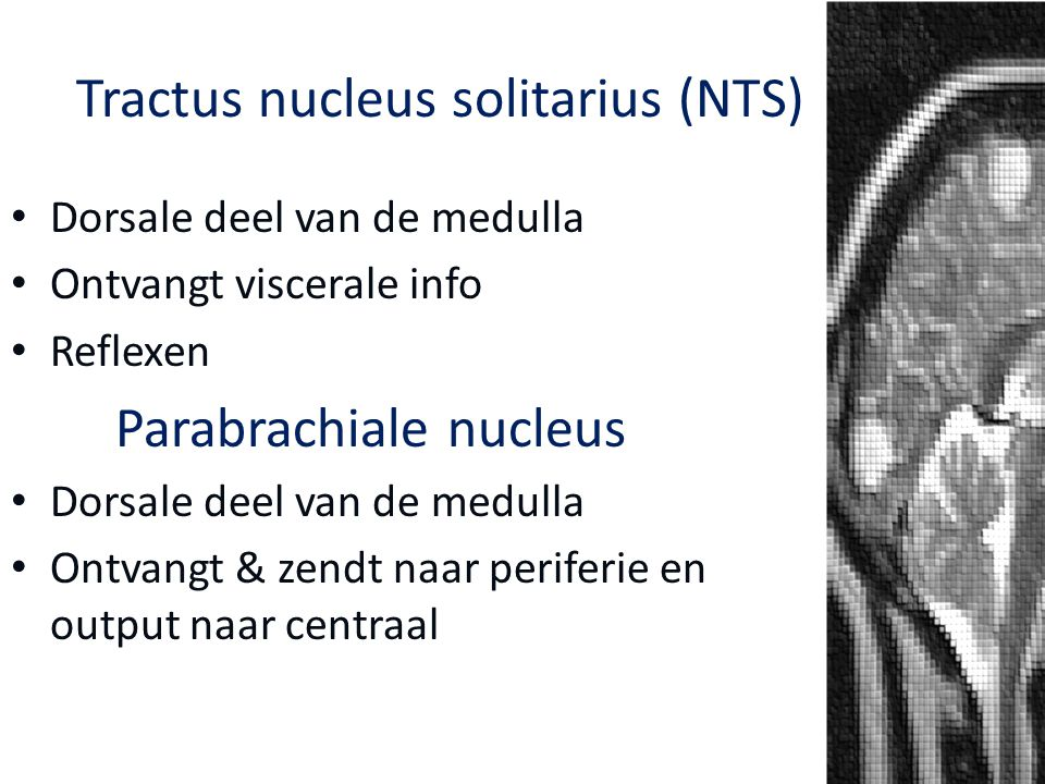 Dorsale deel van de medulla Ontvangt viscerale info Reflexen Parabrachiale nucleus Dorsale deel van de medulla Ontvangt & zendt naar periferie en outp