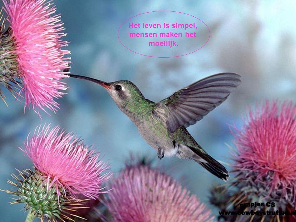 Bedank het leven voor wat het geeft in overvloed: gezondheid,geluk, voldoening...