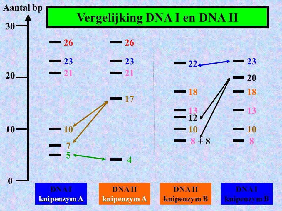 Aantal bp DNA I knipenzym A 30 20 10 0 DNA II knipenzym A DNA II knipenzym B DNA I knipenzym B 26 23 21 10 7 5 26 23 21 17 4 22 18 13 10 12 88 10 13 1