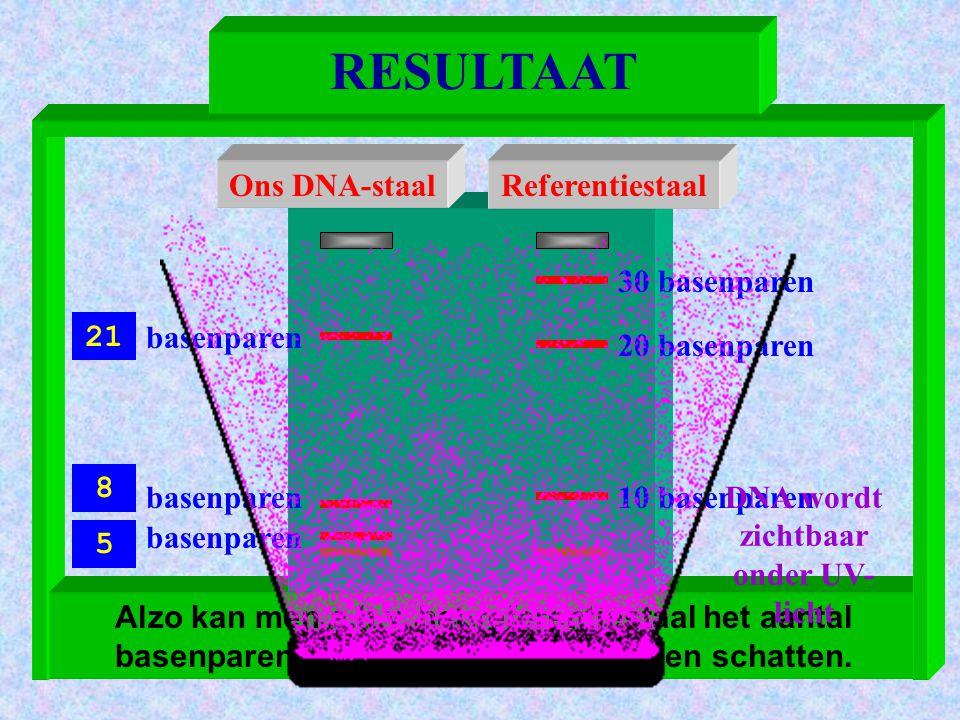 Alzo kan men a.h.v. het referentiestaal het aantal basenparen van onze DNA-fragmenten schatten. DNA zichtbaar maken Ons DNA-staalReferentiestaal 30 ba
