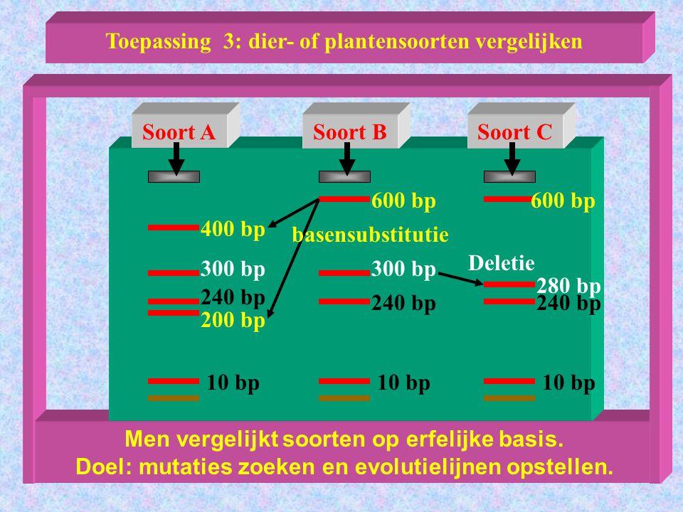 Aansluitend practicum.Vliebergh Sencie 1999 Mutaties zoeken Werken met papieren DNA-modellen.