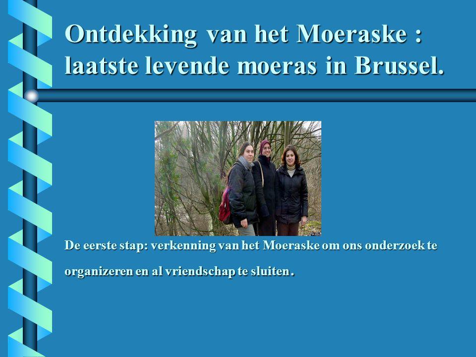 Ontdekking van het Moeraske : laatste levende moeras in Brussel.