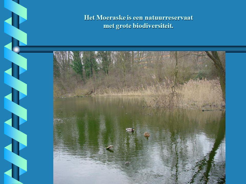 Het Moeraske is een natuurreservaat met grote biodiversiteit.