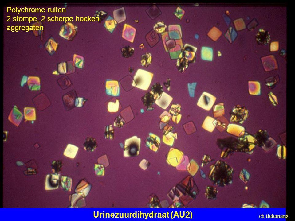 Urinezuurdihydraat (AU2) Polychrome ruiten 2 stompe, 2 scherpe hoeken aggregaten ch tielemans