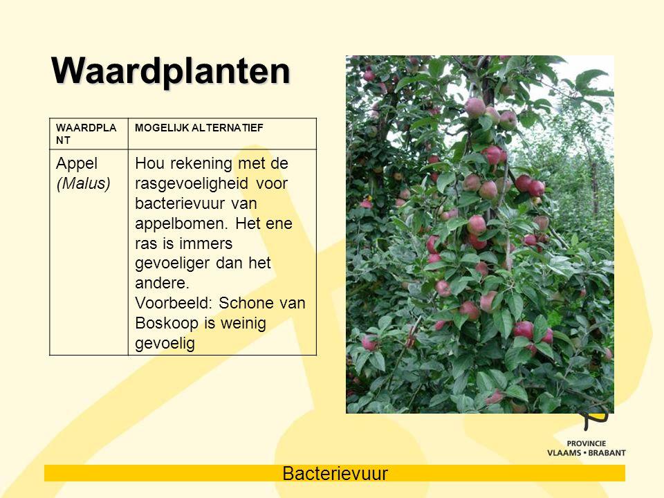 Bacterievuur Waardplanten WAARDPLA NT MOGELIJK ALTERNATIEF Appel (Malus) Hou rekening met de rasgevoeligheid voor bacterievuur van appelbomen. Het ene