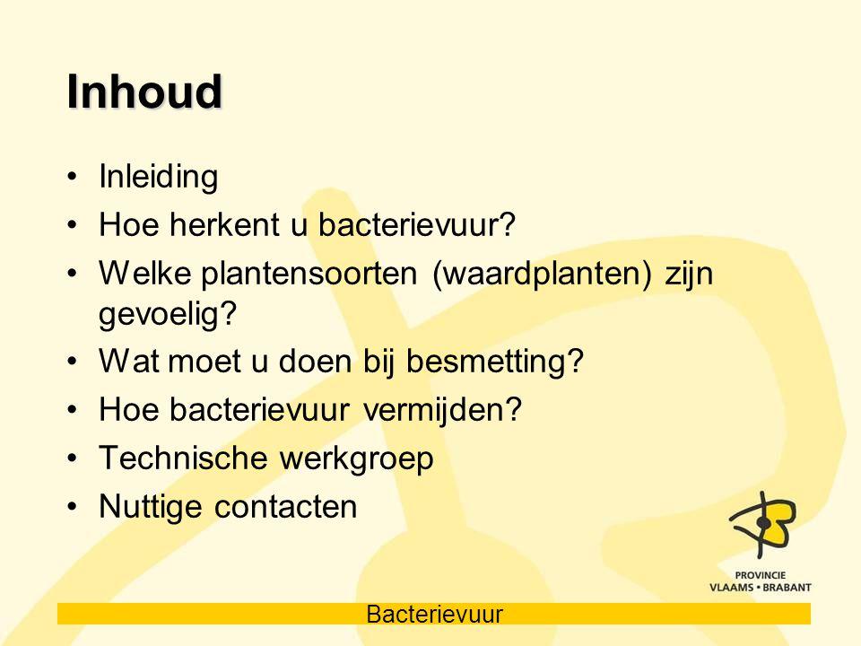 Bacterievuur Inhoud Inleiding Hoe herkent u bacterievuur? Welke plantensoorten (waardplanten) zijn gevoelig? Wat moet u doen bij besmetting? Hoe bacte