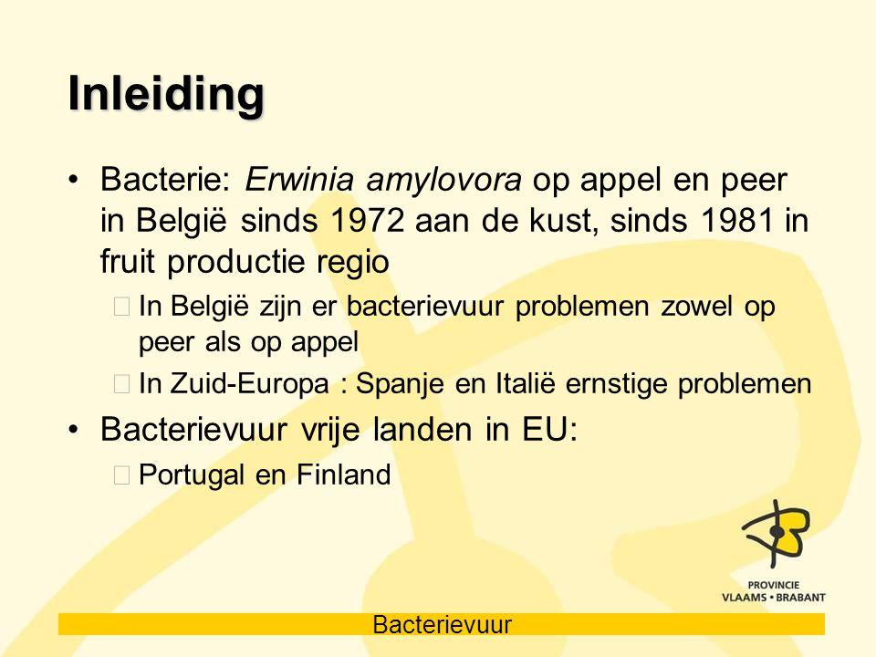 Bacterievuur Inleiding Bacterie: Erwinia amylovora op appel en peer in België sinds 1972 aan de kust, sinds 1981 in fruit productie regio In België zi