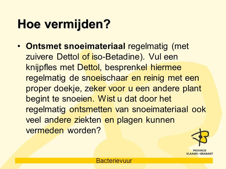 Bacterievuur Hoe vermijden? Ontsmet snoeimateriaal regelmatig (met zuivere Dettol of iso-Betadine). Vul een knijpfles met Dettol, besprenkel hiermee r