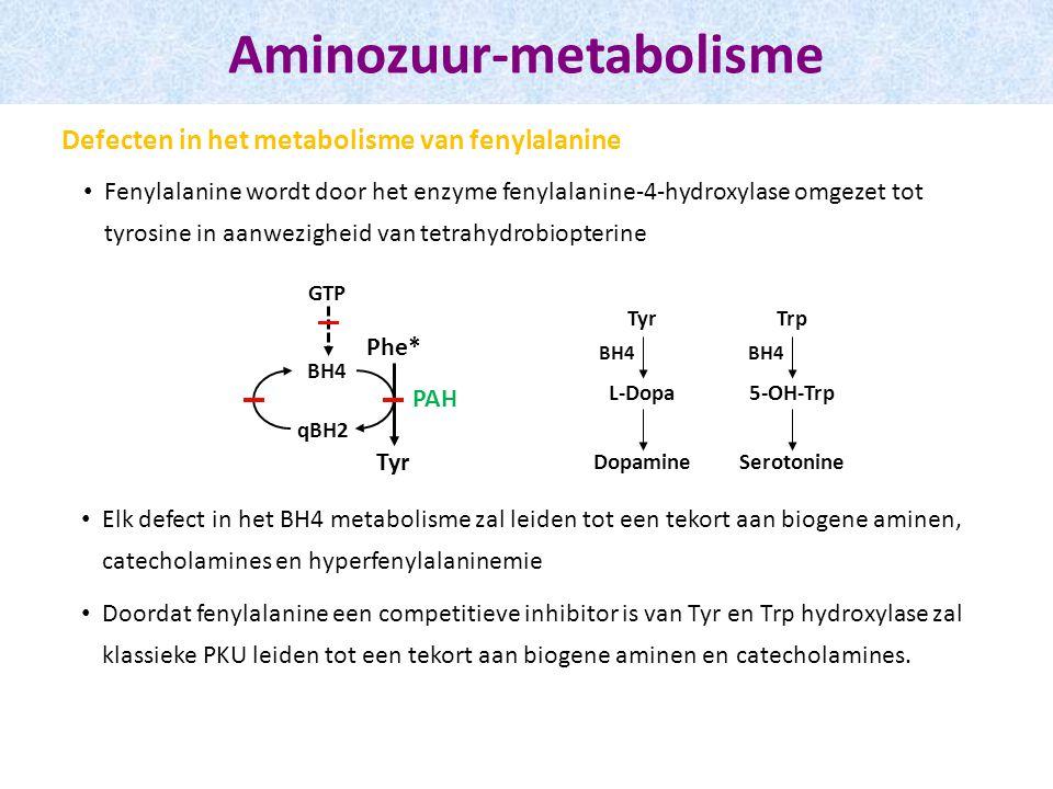 Fenylalanine wordt door het enzyme fenylalanine-4-hydroxylase omgezet tot tyrosine in aanwezigheid van tetrahydrobiopterine Aminozuur-metabolisme Defecten in het metabolisme van fenylalanine Phe* Tyr BH4 qBH2 PAH GTP Tyr L-Dopa BH4 Trp 5-OH-Trp BH4 Dopamine Serotonine Elk defect in het BH4 metabolisme zal leiden tot een tekort aan biogene aminen, catecholamines en hyperfenylalaninemie Doordat fenylalanine een competitieve inhibitor is van Tyr en Trp hydroxylase zal klassieke PKU leiden tot een tekort aan biogene aminen en catecholamines.