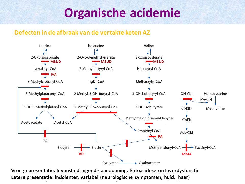 Organische acidemie Defecten in de afbraak van de vertakte keten AZ MSUD MMA BD PA IVA Blau N, Duran M, Blaskovics ME, · Gibson KM.