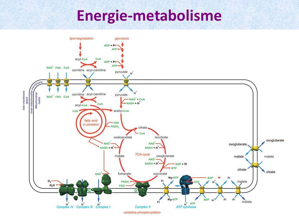 Energie-metabolisme