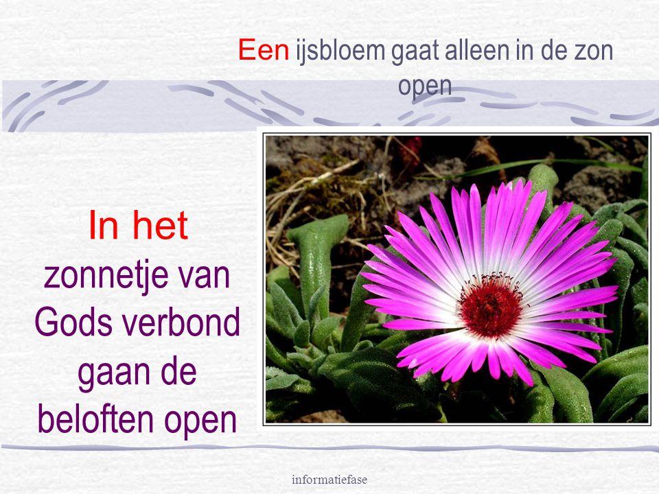 informatiefase In het zonnetje van Gods verbond gaan de beloften open Een ijsbloem gaat alleen in de zon open