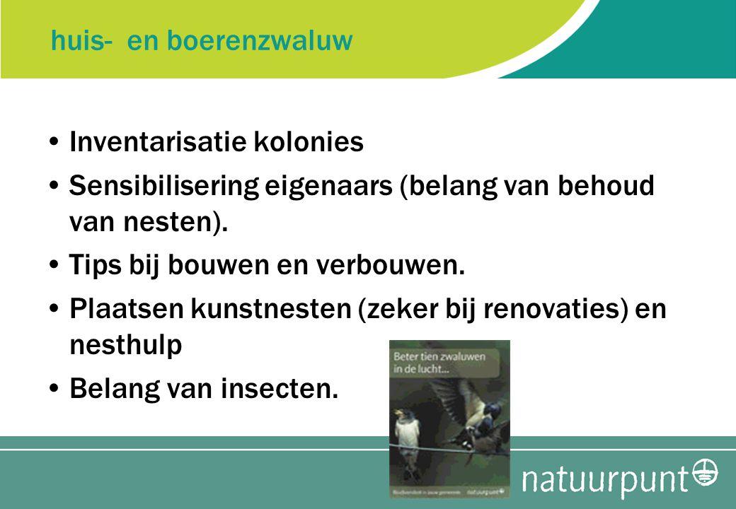 huis- en boerenzwaluw Inventarisatie kolonies Sensibilisering eigenaars (belang van behoud van nesten).